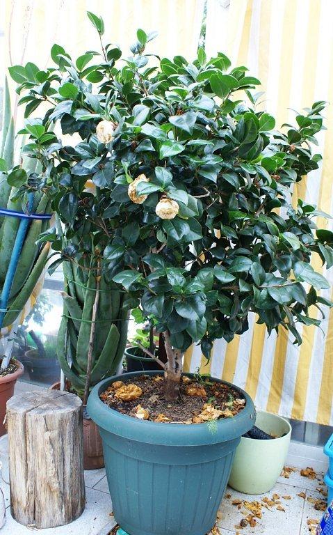 Plantas exterior sol viento cuidar de tus plantas es - Plantas exterior sol ...